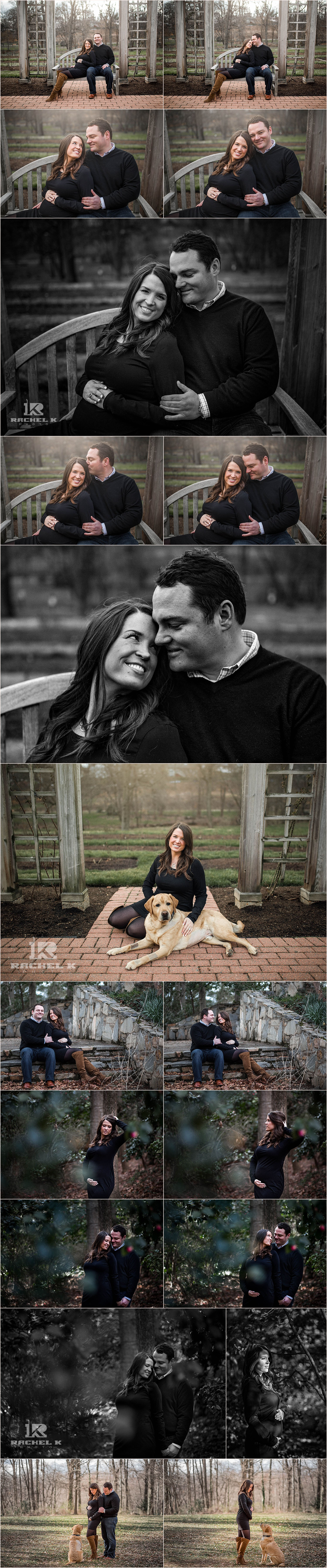 Maternity session with golden retriever in Arlington Virginia by Rachel K Photo