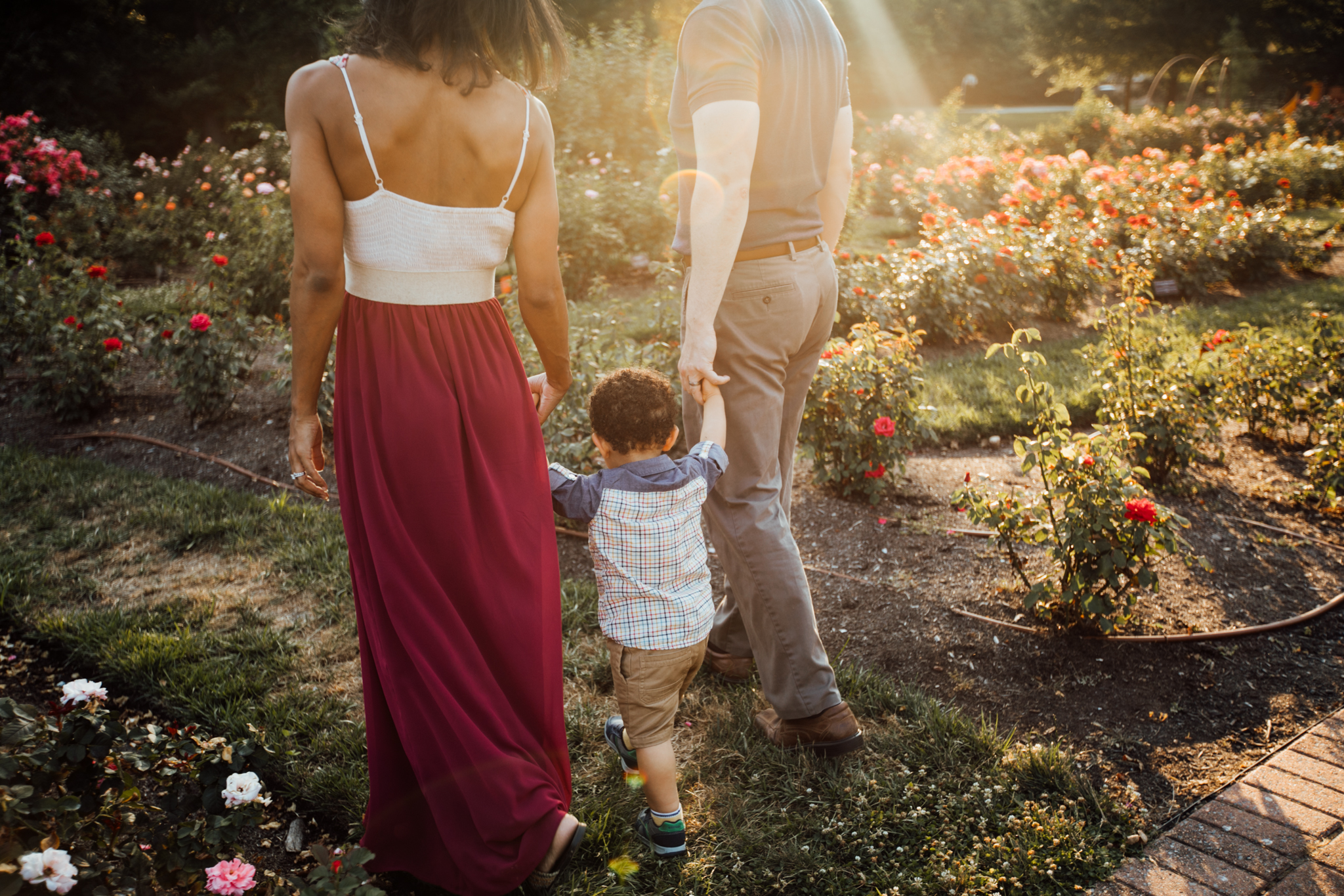 Mom and dad hold toddler's hand in rose gardens by Madison and Huntsville Alabama family photographer Rachel K Photo