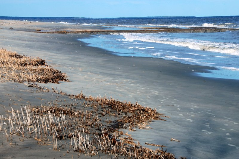 Grassy stumps show how far the marsh behind the beach used to stretch.