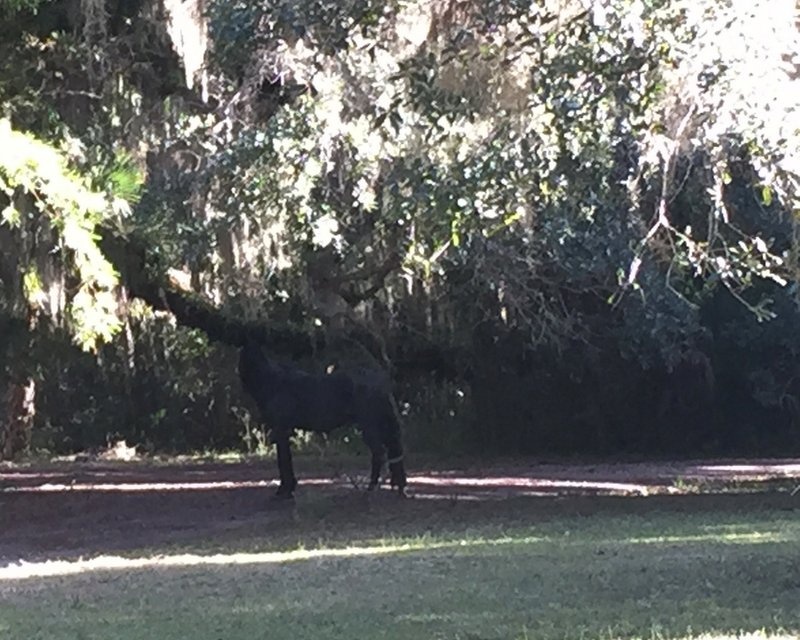 We saw one live wild pony and one dead one. I didn't get a great pic of either, but here's proof that they're there!