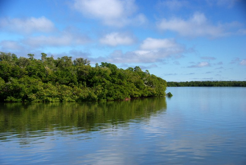 Mangroves near Goodland, FL
