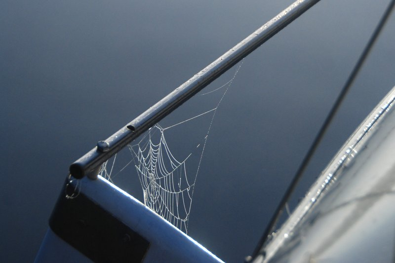 A spider web in the morning fog.