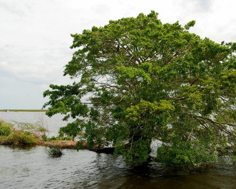 Scenery on the Okeechobee waterway