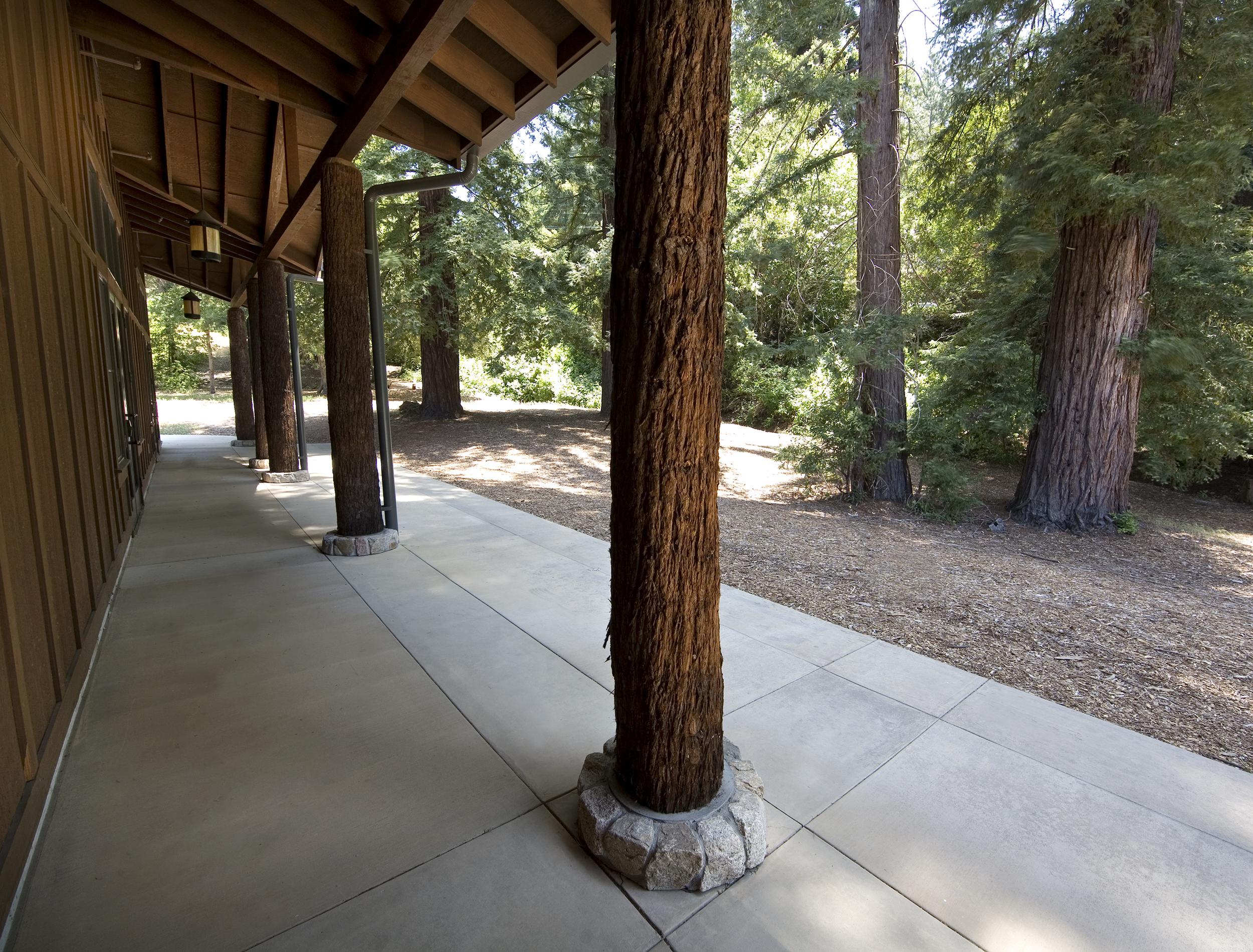 mcafee_fieldhouse_mount_hermon_tree_trunk_detail