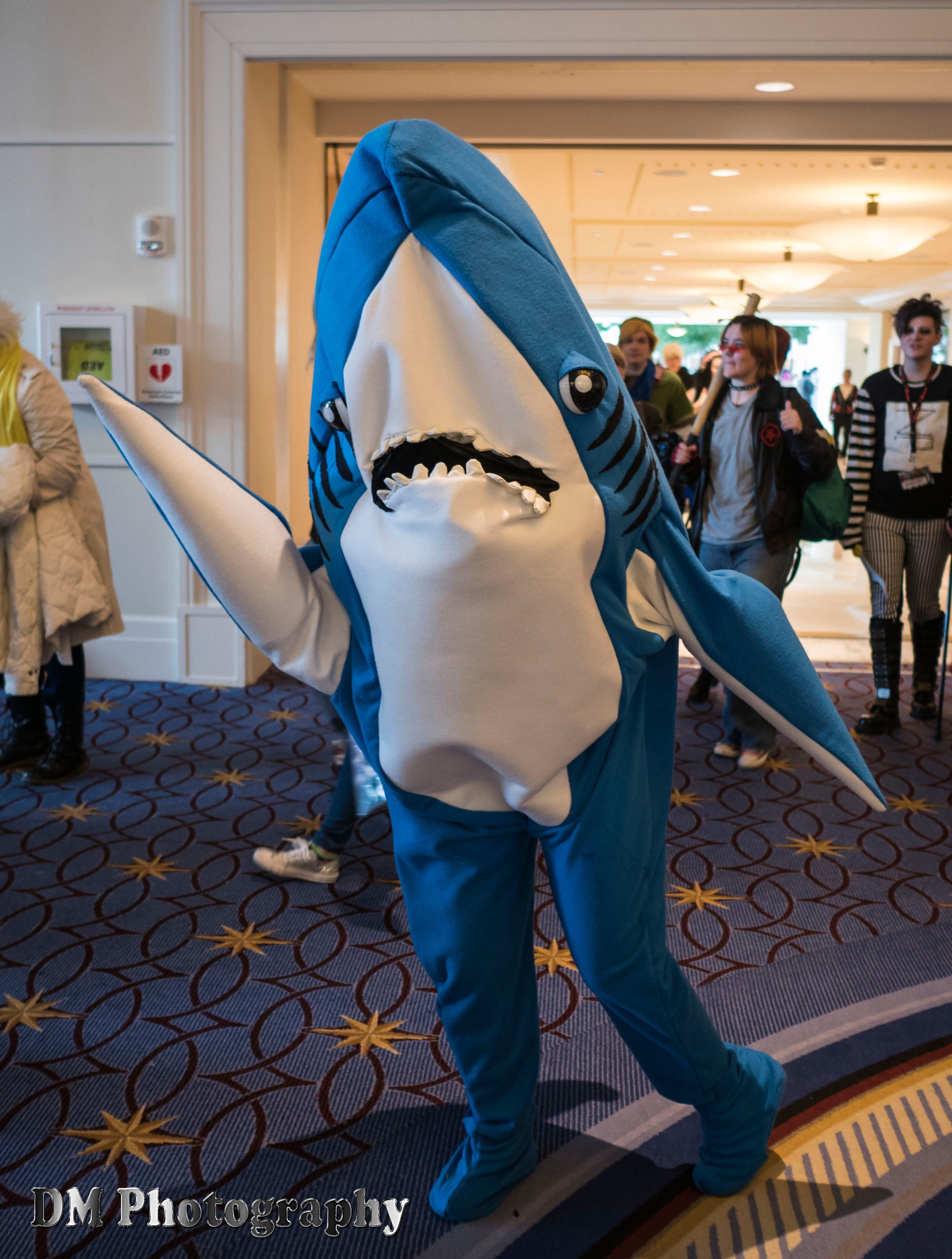 Superbowl Shark