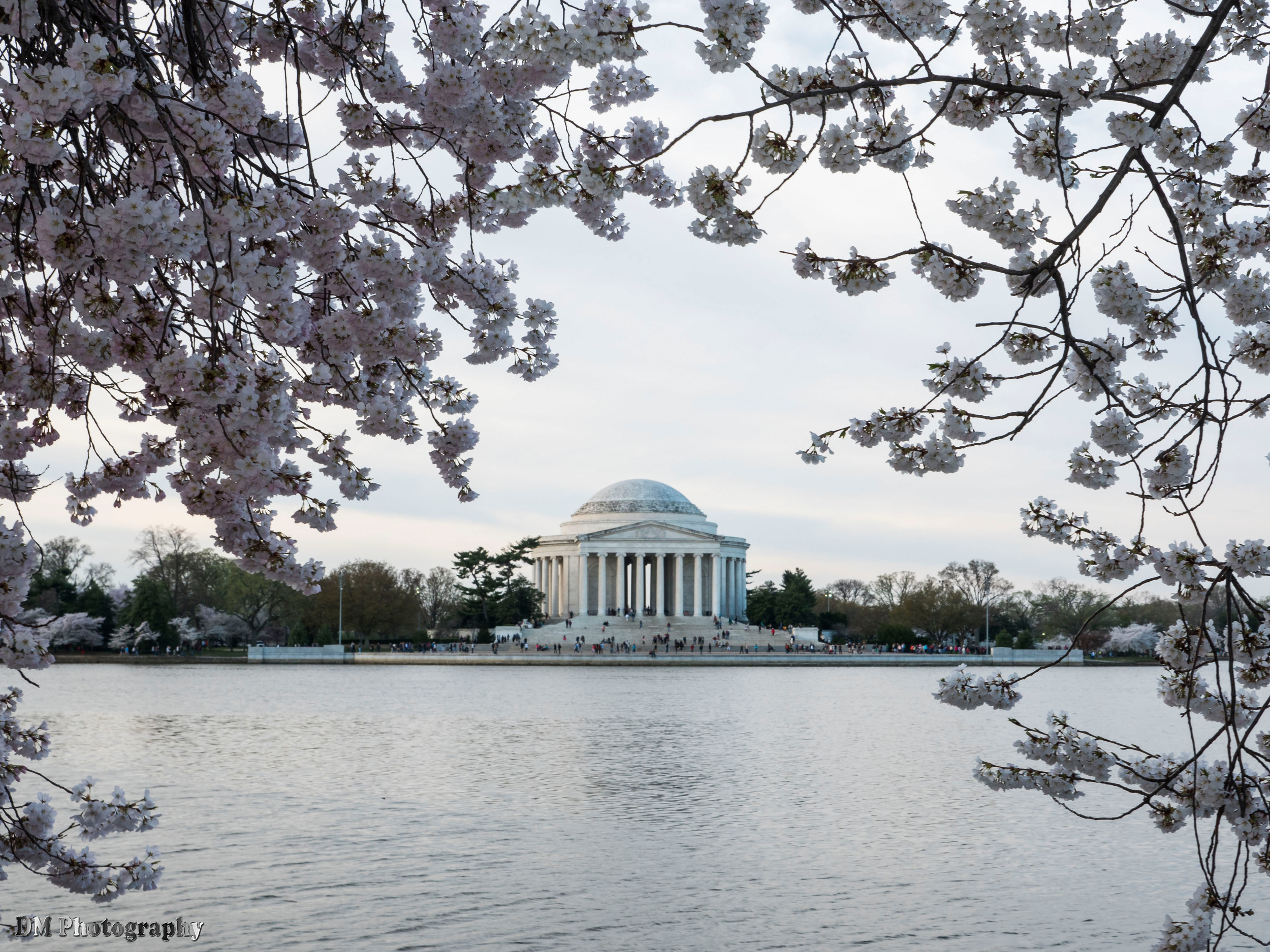 Cherry Blossoms at Tidal Basin
