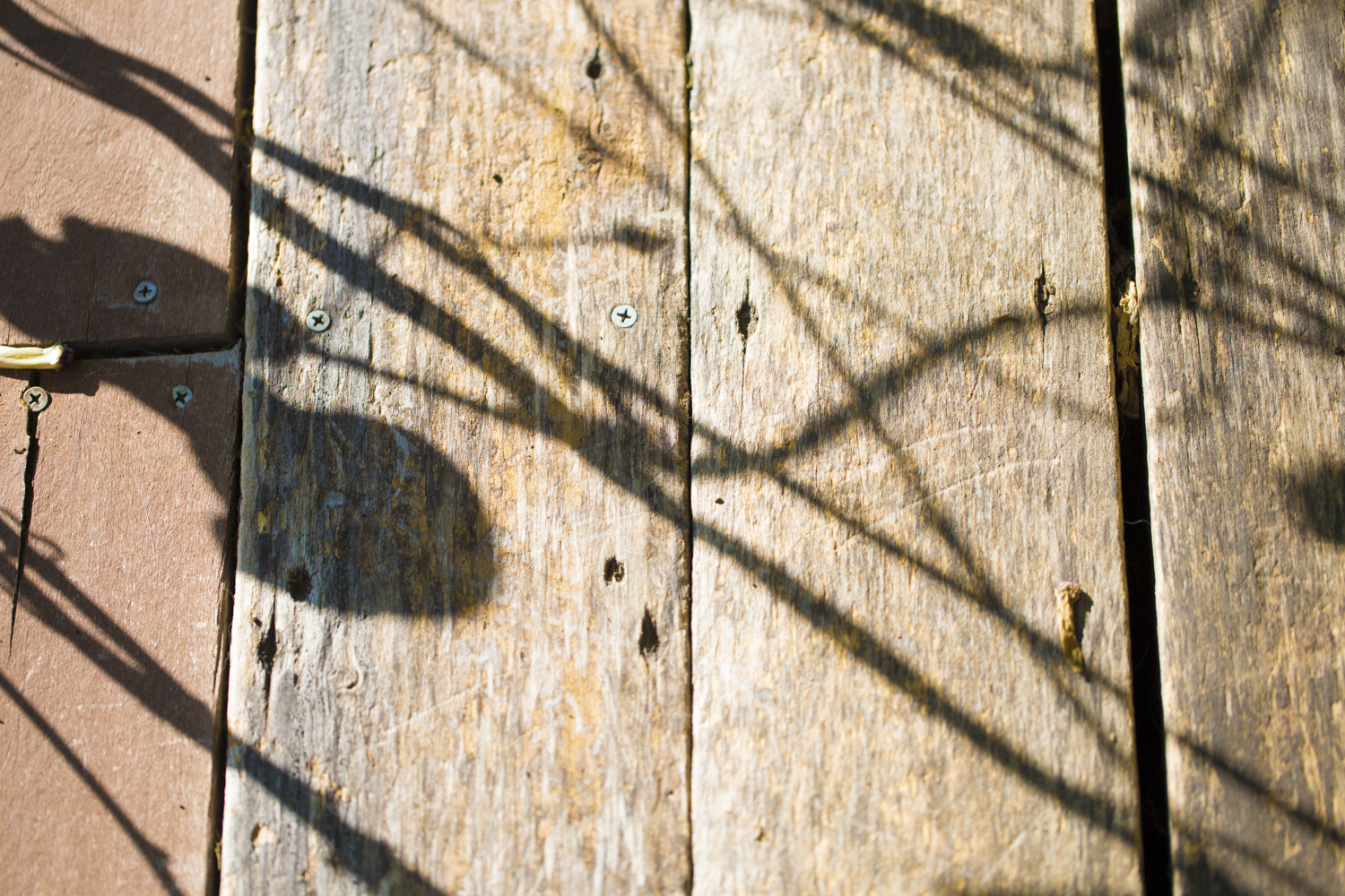 Shadows of the morning glories danced across the porch planks...