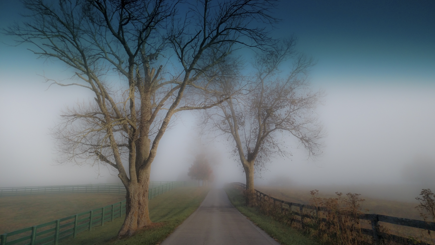 The road leading to  Sunwise Farm and Sanctuary , Kathleen and Greg's home and studio...