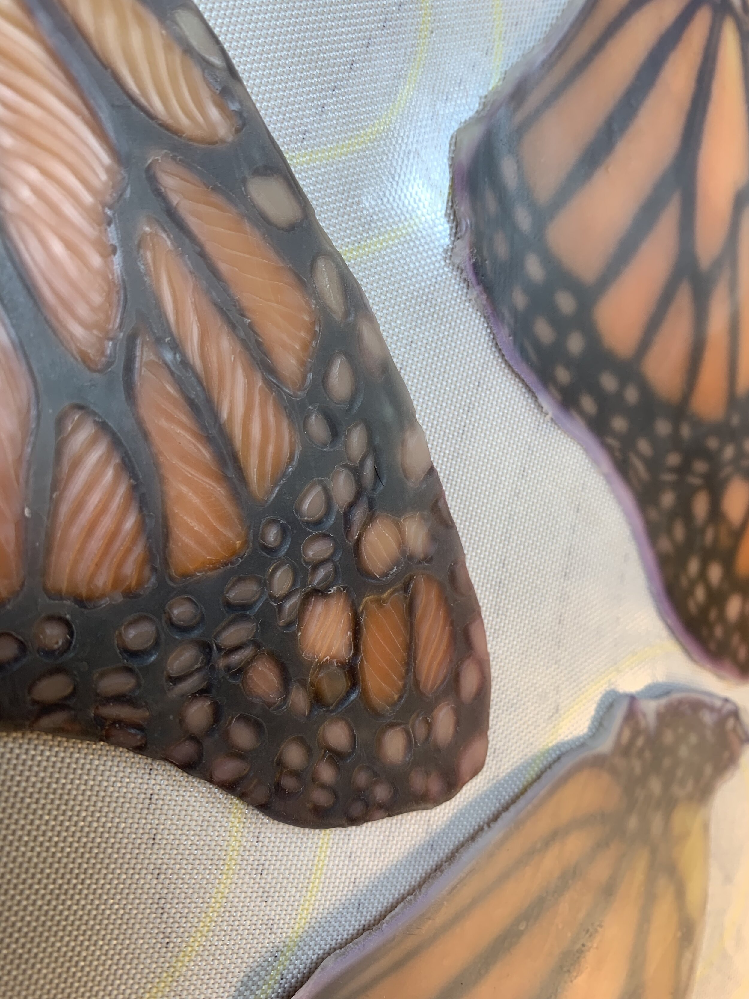 Waxing up macro photos of the monarchs we raised led me into stillness where I could reflect on the complete dependency of these creatures and the ecology in which they live.