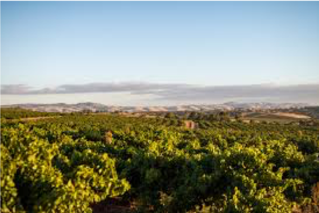- Barossa ValleyAs the biggest wine production state, South Australia is home to some of Australia's most famous regions, and also to some of the oldest vines in the world: Barossa Valley, Clare Valley, McLaren Vale, Eden Valley, Adelaide Hills and Coonawarra.
