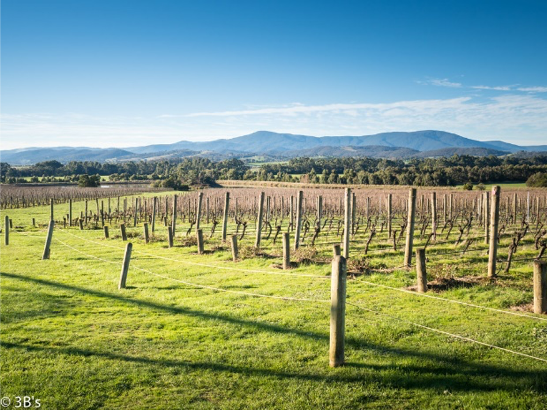 - Yarra ValleyAs a major wine-producing state, Victoria comprises interesting wine regions including Yarra Valley, Mornington Peninsula, Geelong, Macedon Ranges, King and Alpine Valleys.