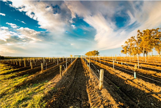- Hunter ValleyThe Hunter Valley is known for its Chardonnay, Shiraz and Semillon. About two hours driving from Sydney, it is the most visited wine region, attracting big concerts and artists such Rolling Stones and Red Hot Chilli Peppers.