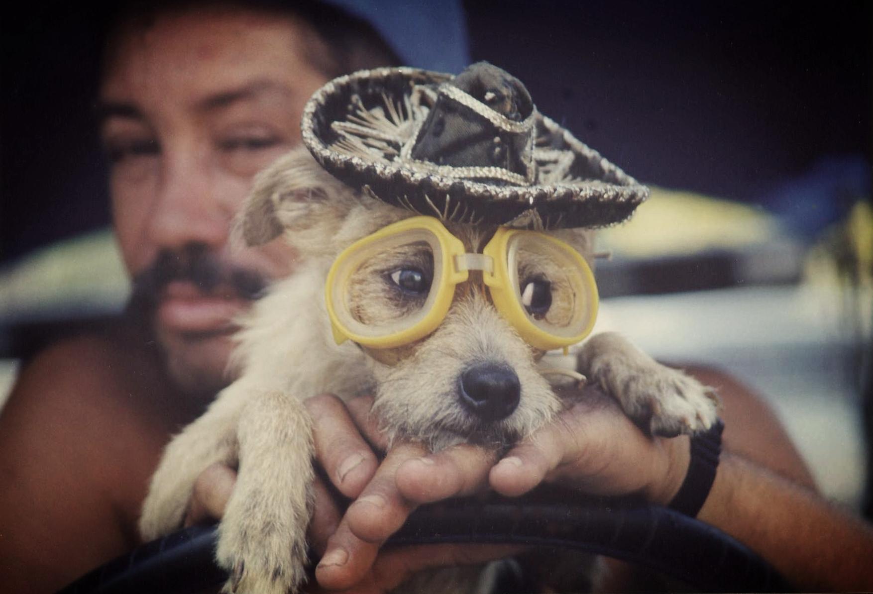 Cuba - Guy With Dog