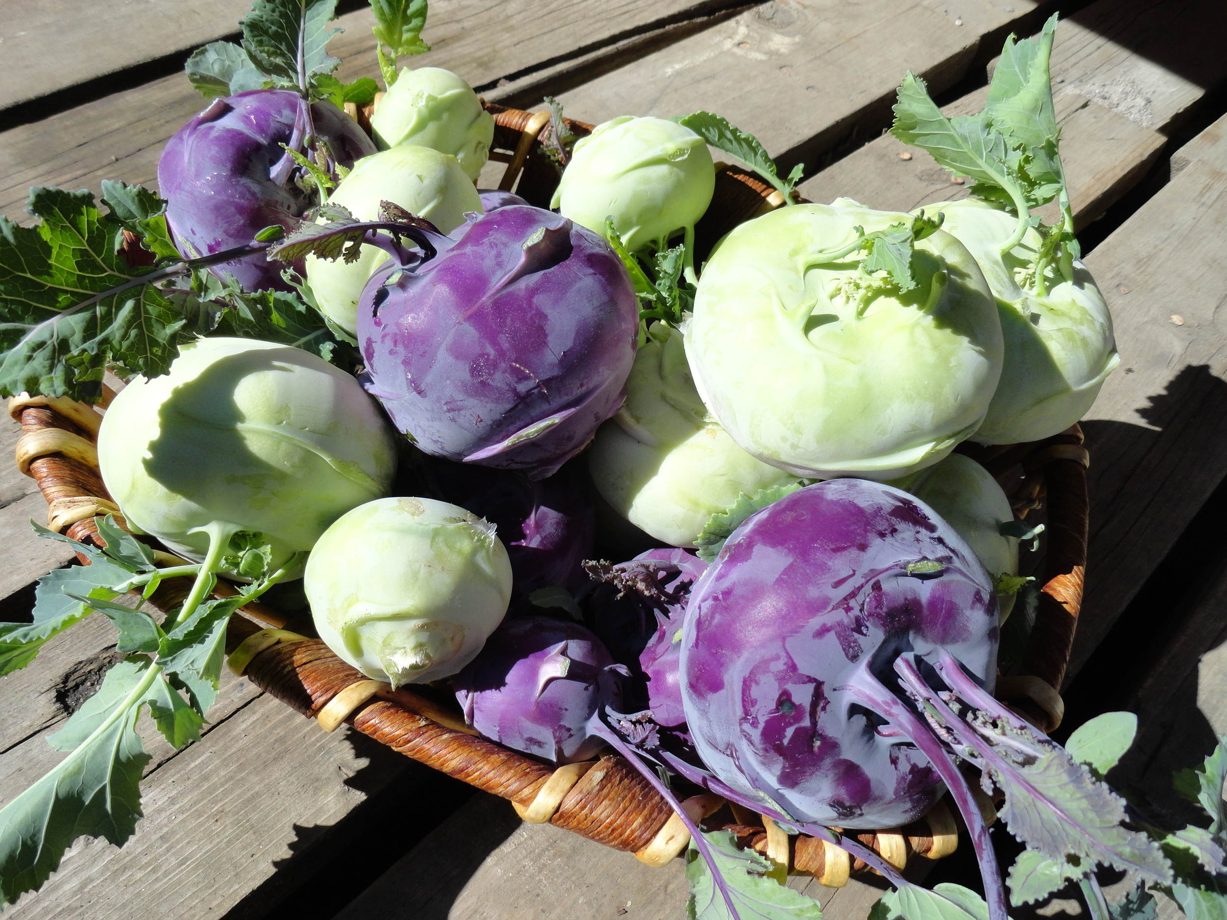 Purple and green kohlrabi in all different Sizes