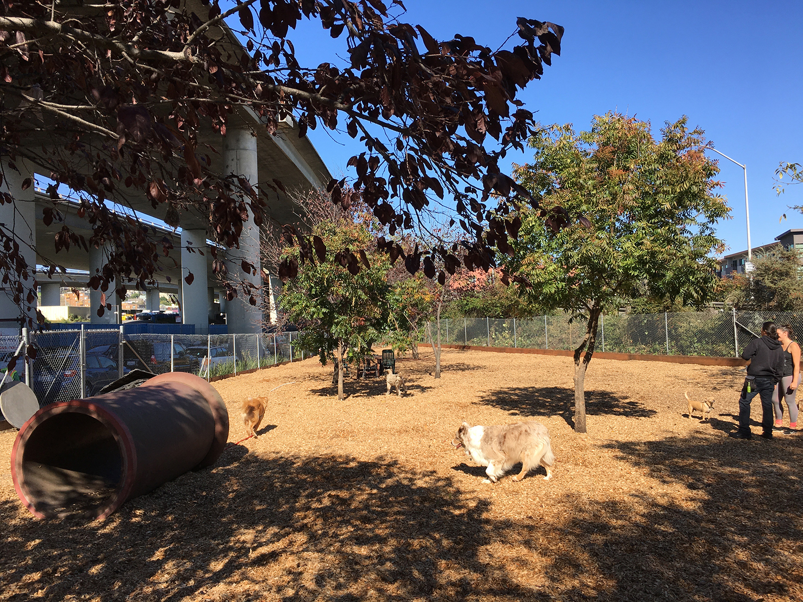 Progress-Park-Dog-Run-Nov-2016w.jpg
