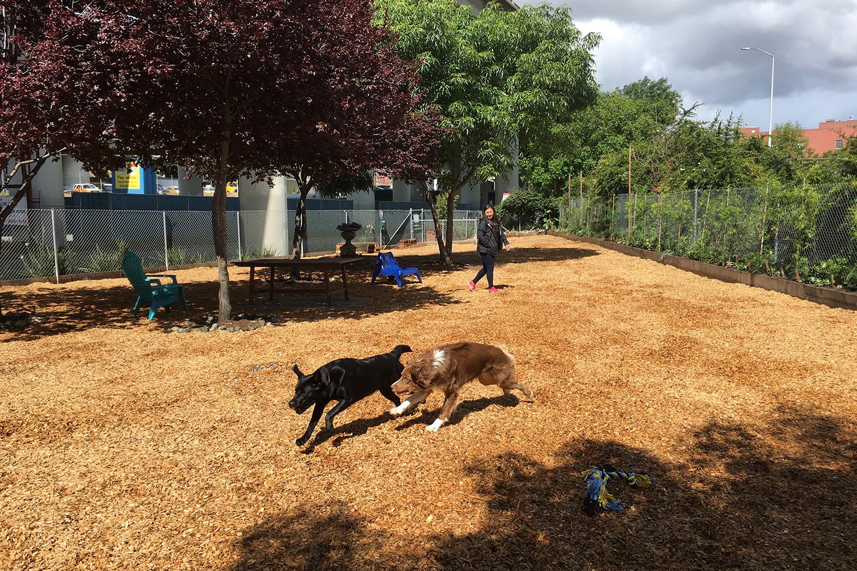 Volunteers - Progress Dog Run.jpg