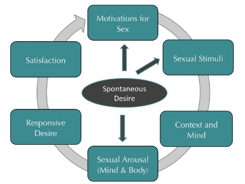 Basson Sexual Response Cycle