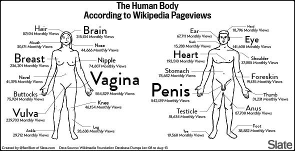 Wikipedia Genitals