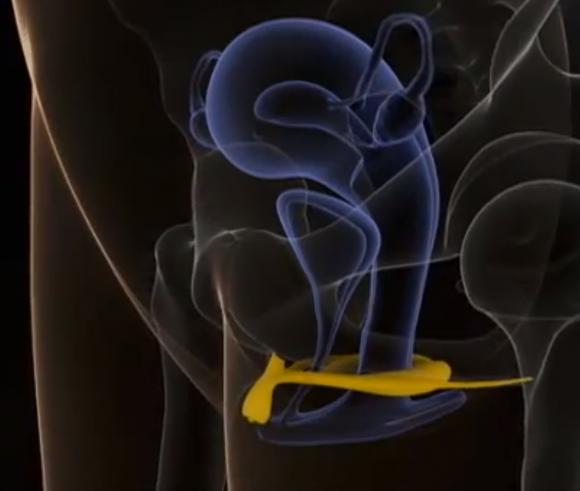 male Clitoris hormone after