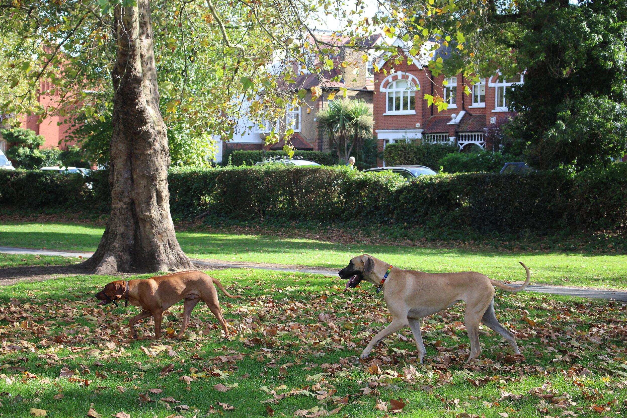Best London Neighbourhood For Families, Barnes