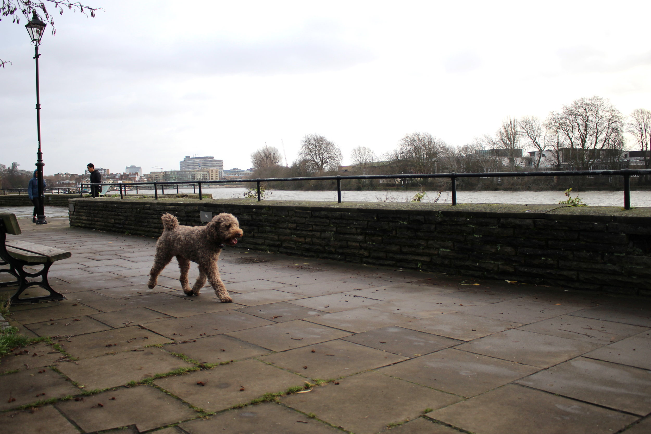 Thames VIIII.JPG