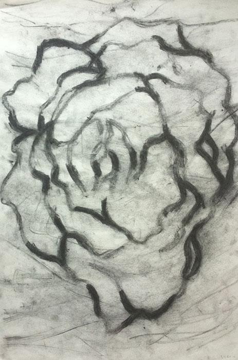GONZALO_MARTIN-CALERO-DRAWINGS-flower-drawings-17.jpg