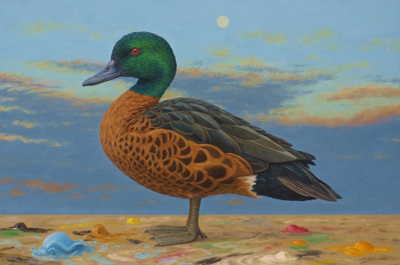 Chesnut Teal and the Moon