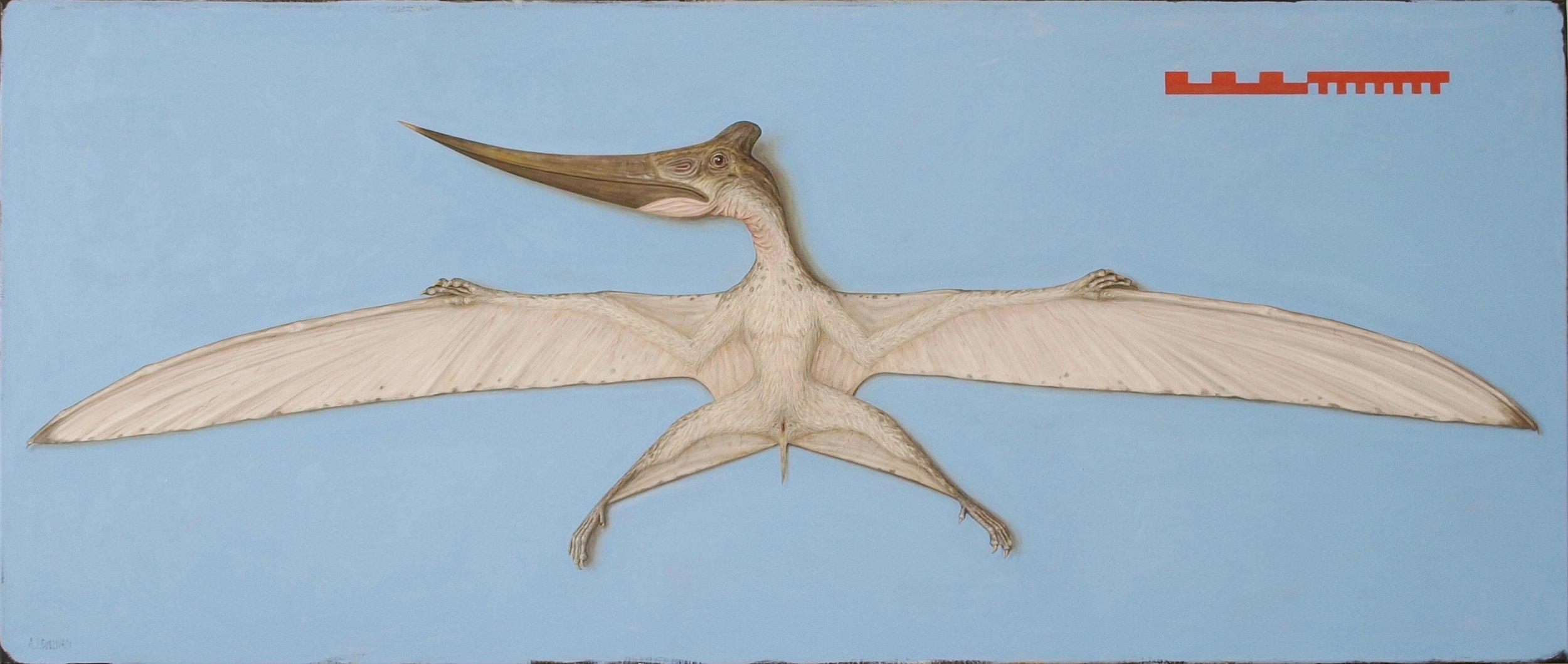Pteranodon Juvenile