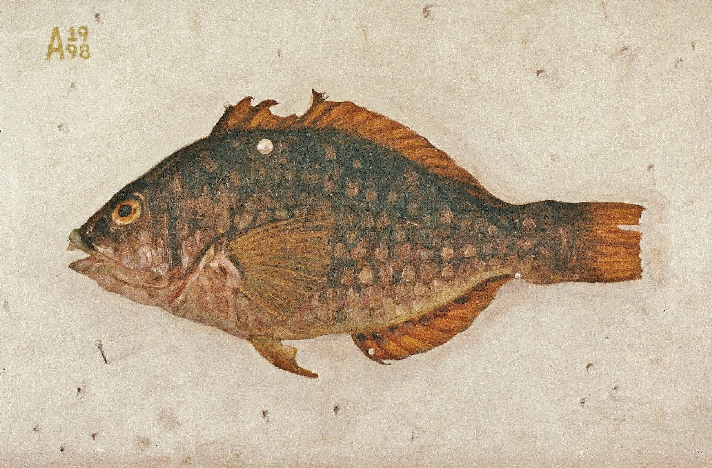 Unknown Fish