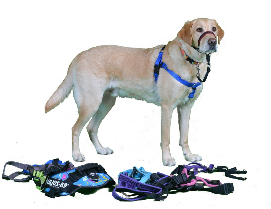 What's in YourDog's Closet_ (3).jpg