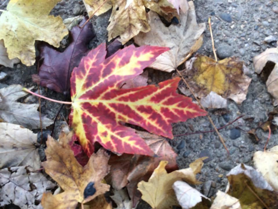 fall closeup2.jpg