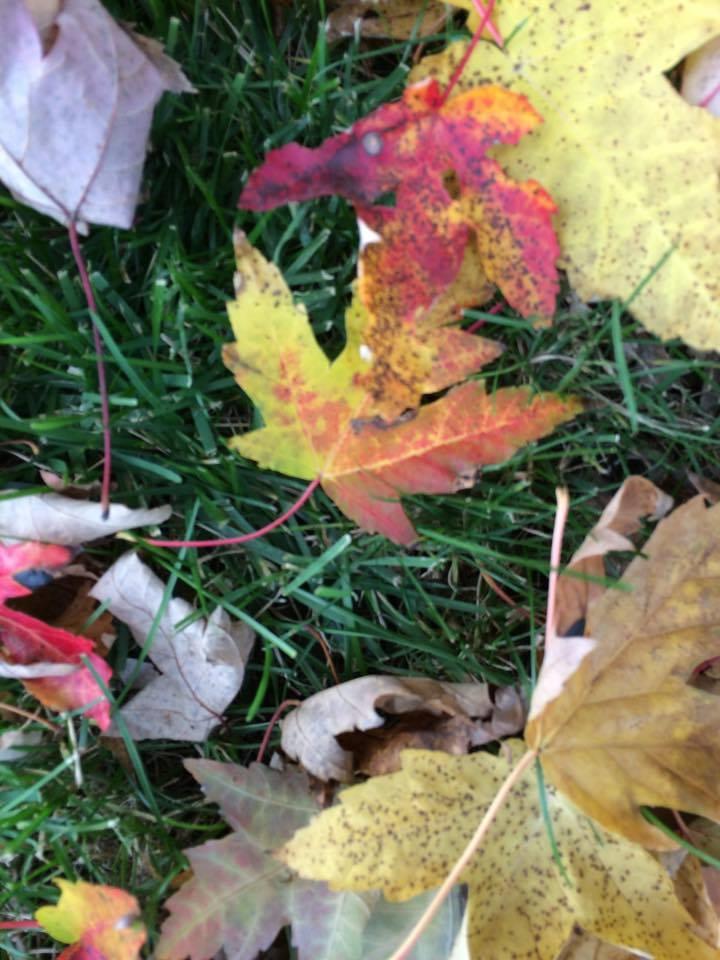 fall closeup3.jpg