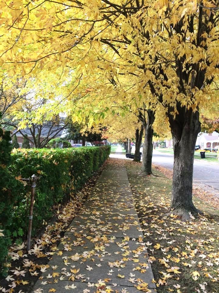 leaf street2.jpg