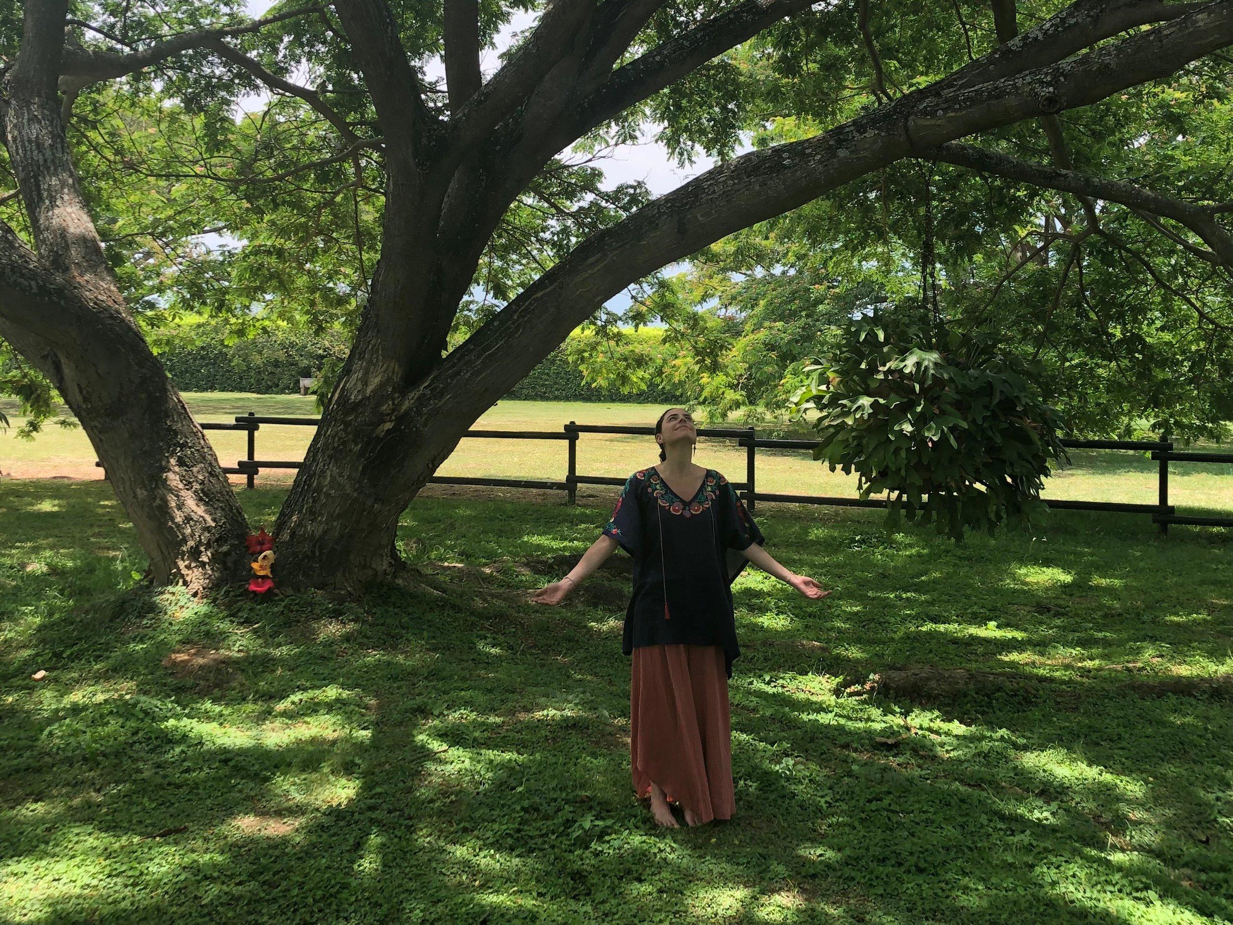 karina-tree-sm.jpg