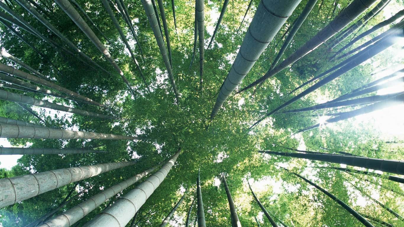 duurzaam interieur bamboe