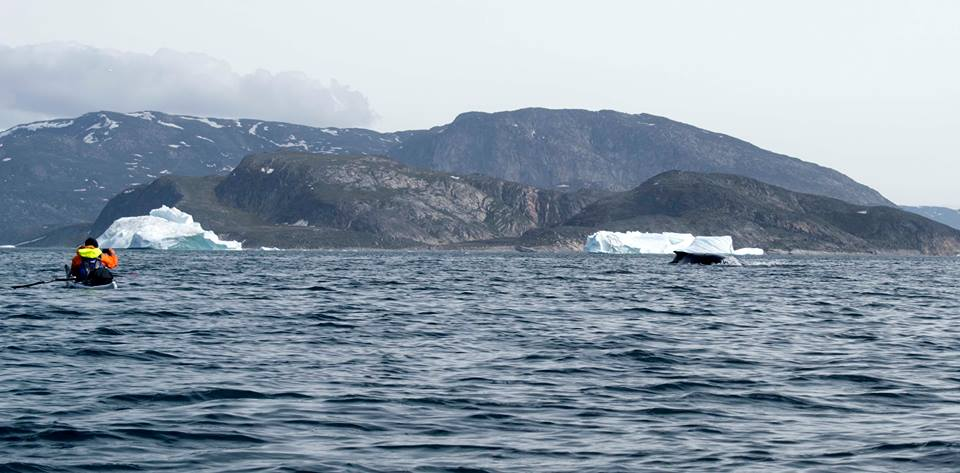 One of our paddlers photographing a humpback north of Ilulissat.