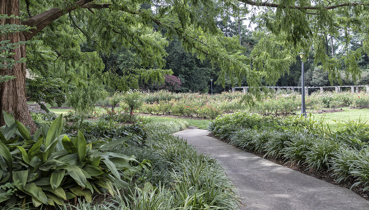 Raleigh Municipal Rose Garden offers a quiet space for visitors.