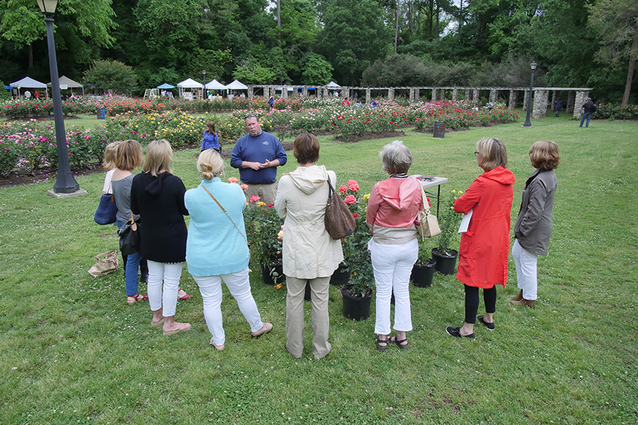 Art in the Garden, the annual arts festival to benefit Raleigh Little Theatre, will be held on May 6th, the height of the spring rose bloom.  photo by tim mckay