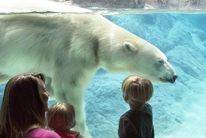 photos courtesy of North Carolina Zoo