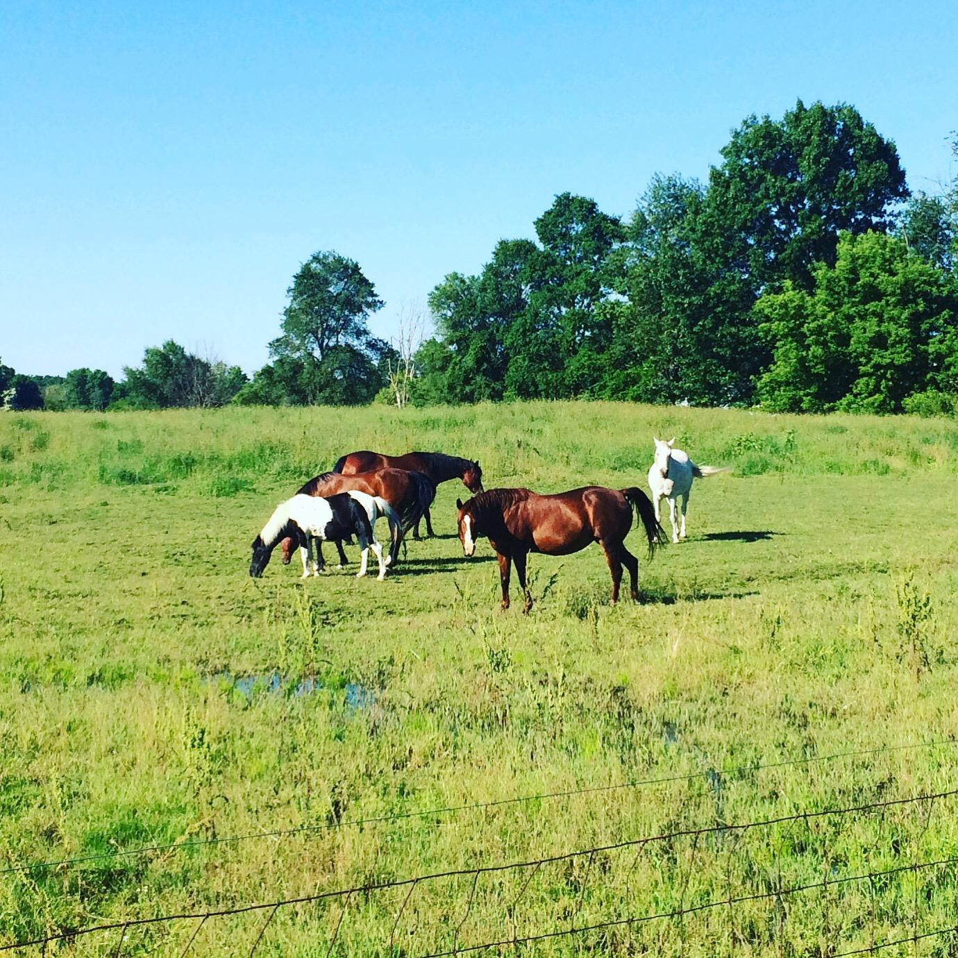 HORSES MONTGOMERY.JPG