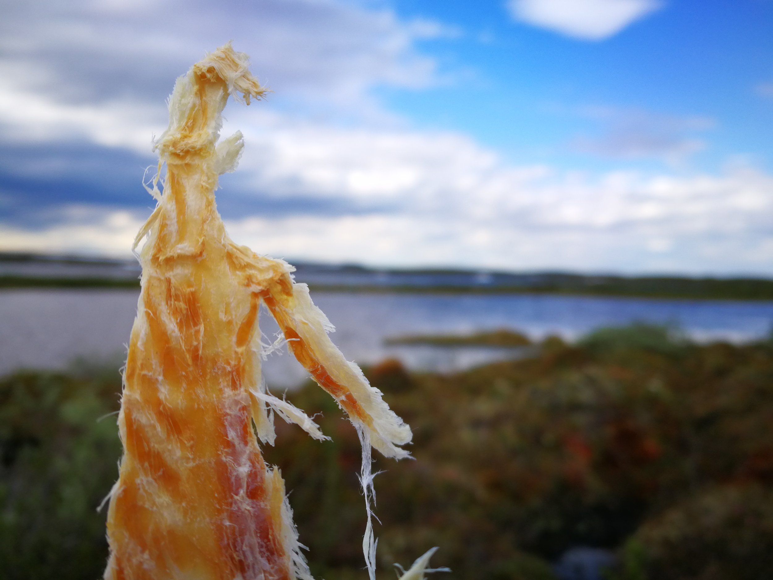 Dried fish with a view