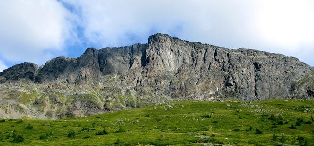 Skogshorn i sommerdrakt. Foto Jørgen Aamot (lite).jpg