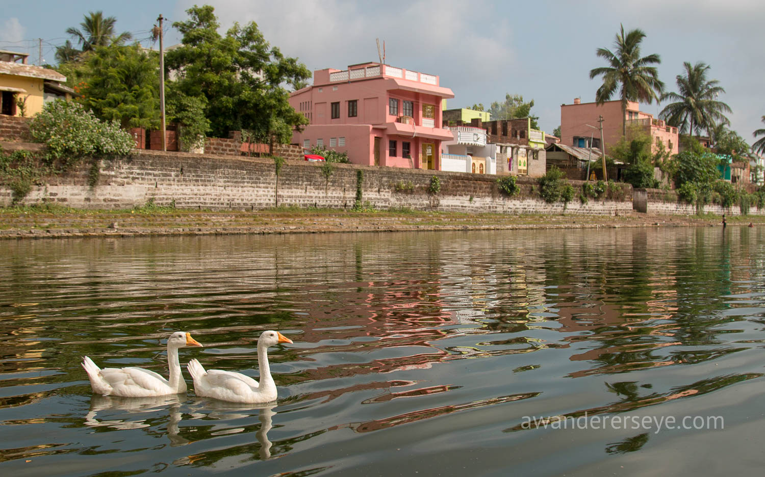 A neighborhood pond in Odisha.