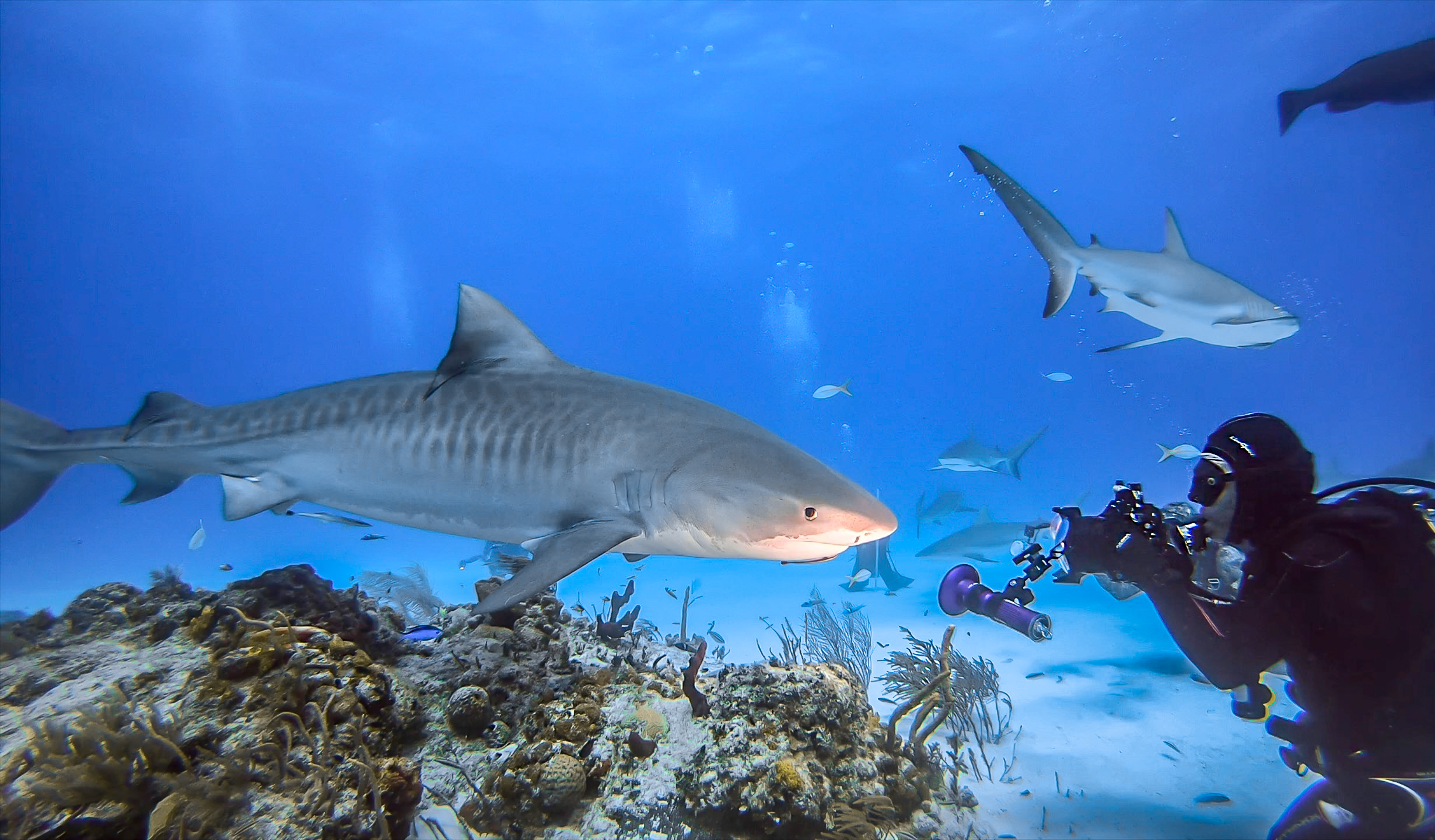 Me and tiger shark-2.jpg