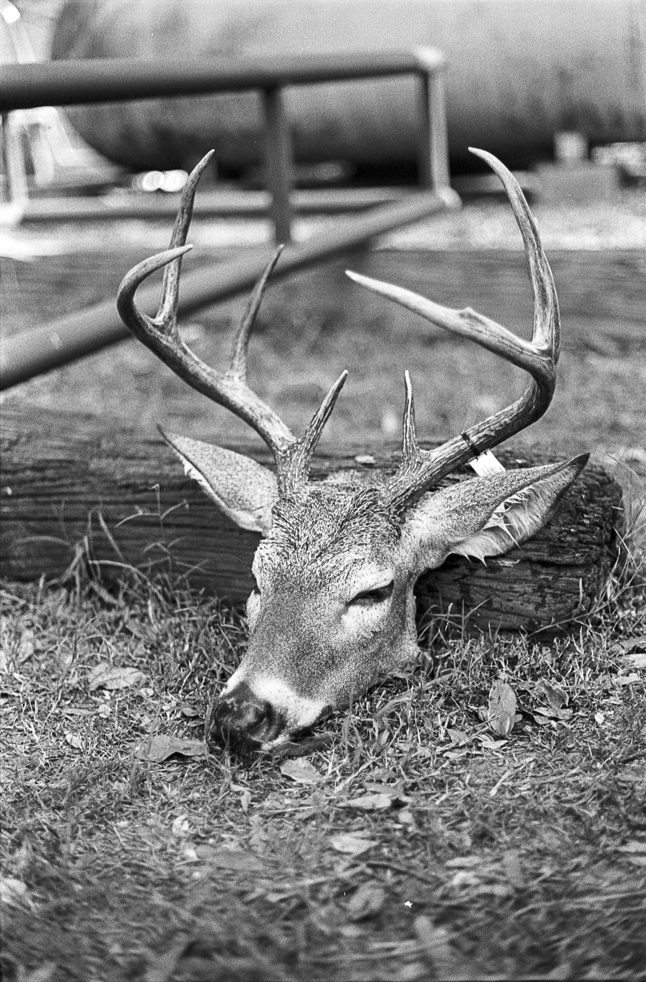 deer309-1.jpg