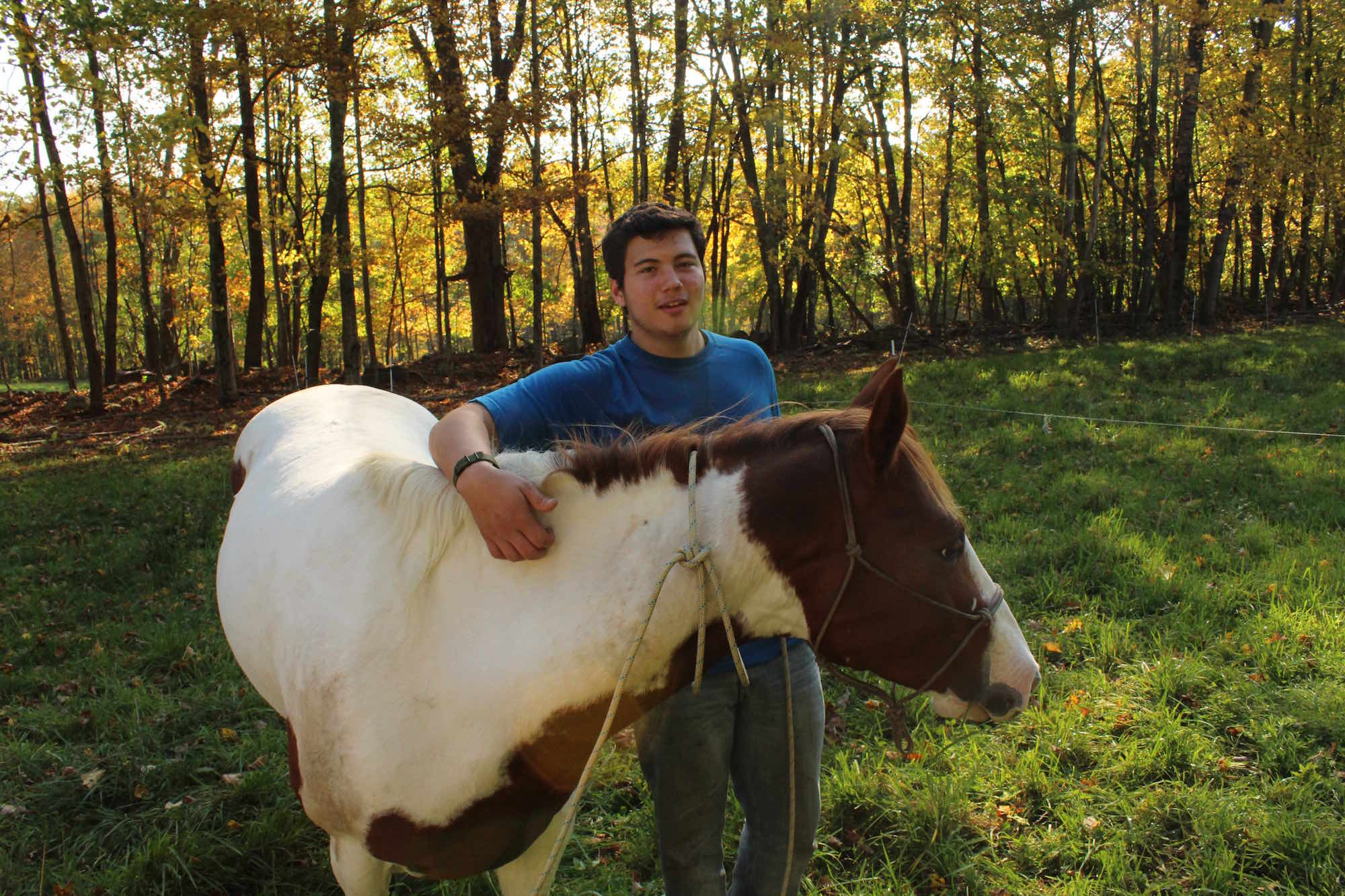At work with the horses