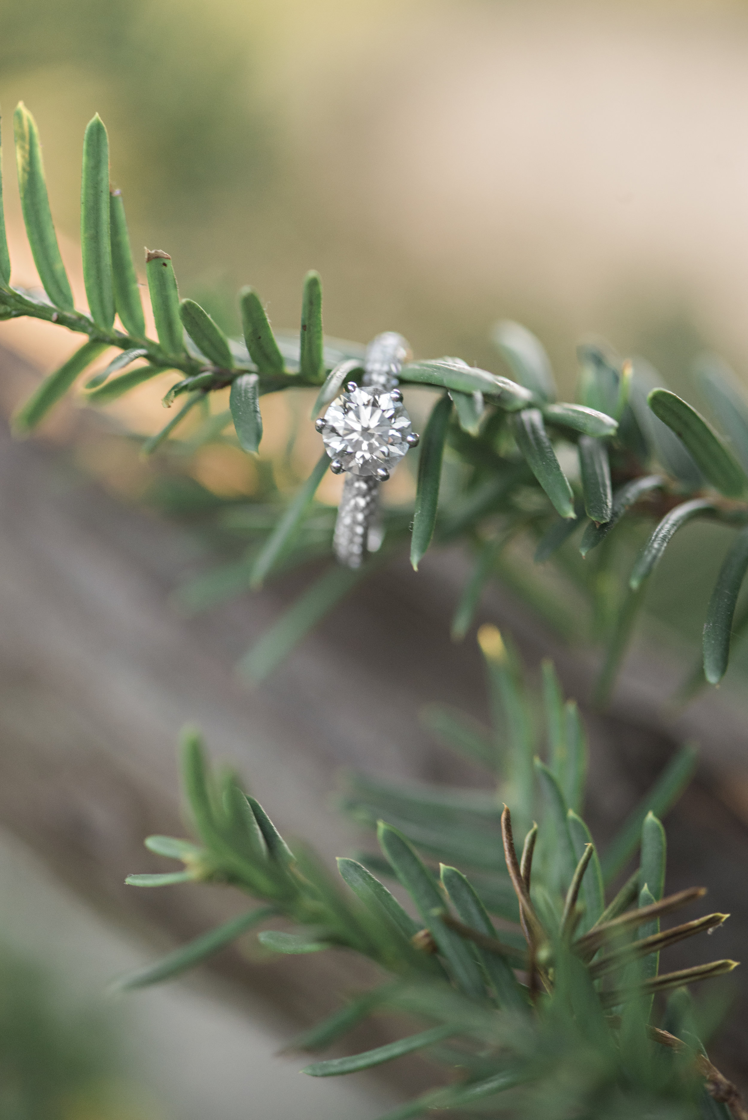 JM_engagement-204.jpg