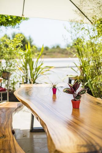 ibiza-restaurant-wild-beets-2014-2.jpg