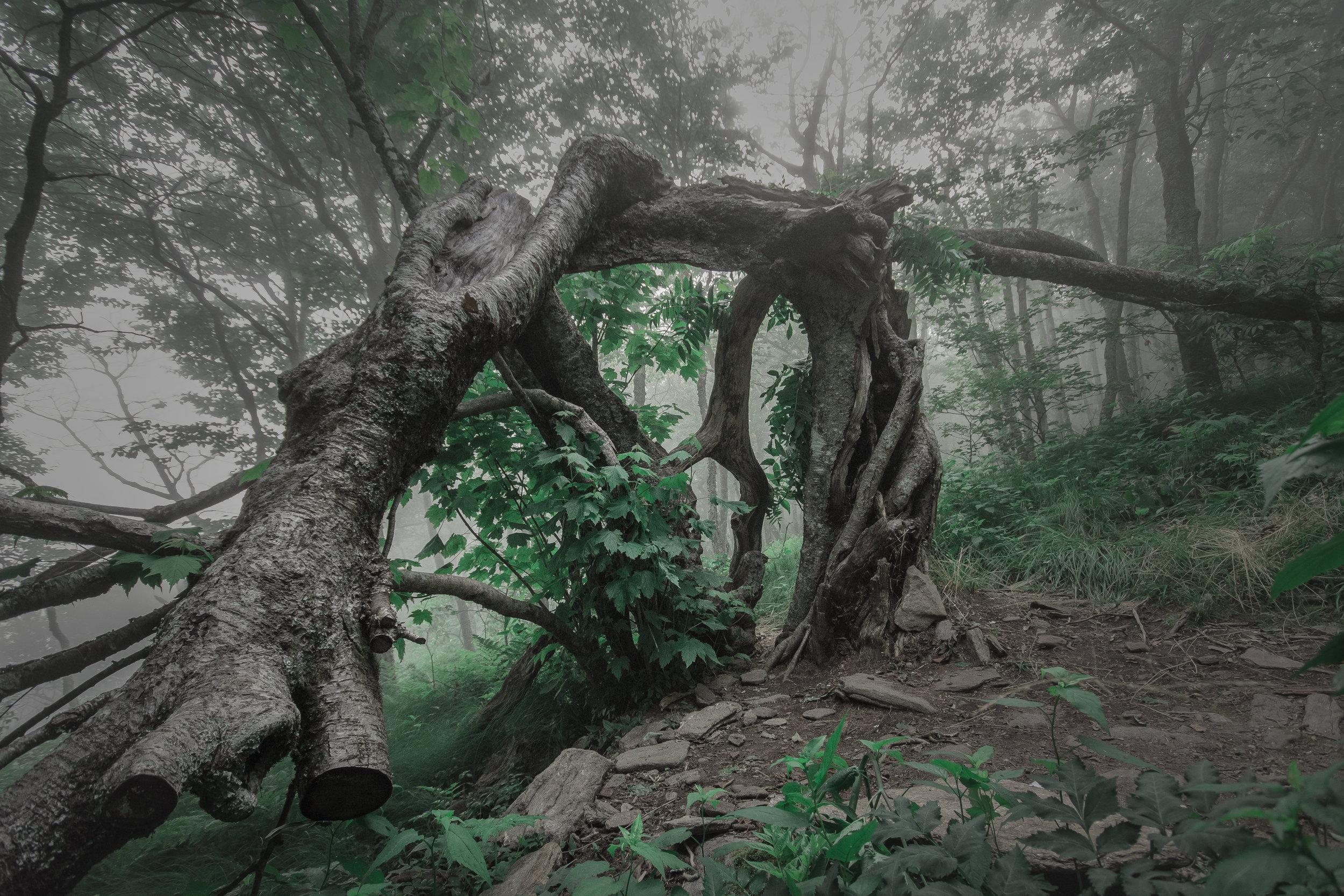 sicktree.jpg