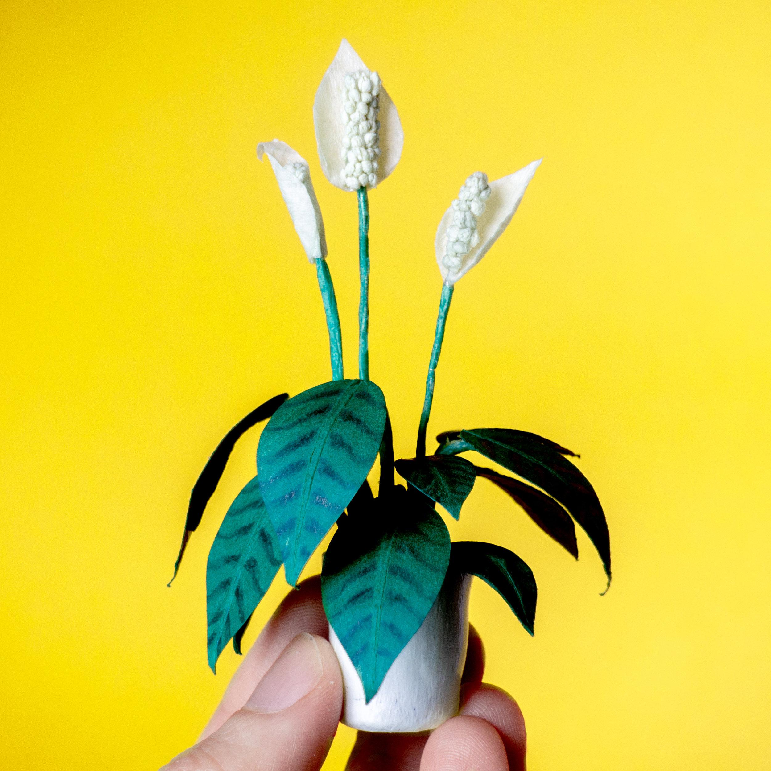 pot plant.jpg